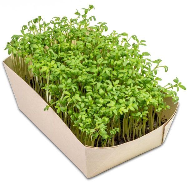 Mini_eco-jardín_berros
