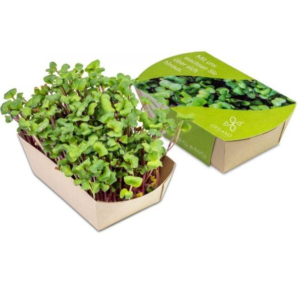 Mini_eco-jardin_rabano_chino_rosa_con_packaging