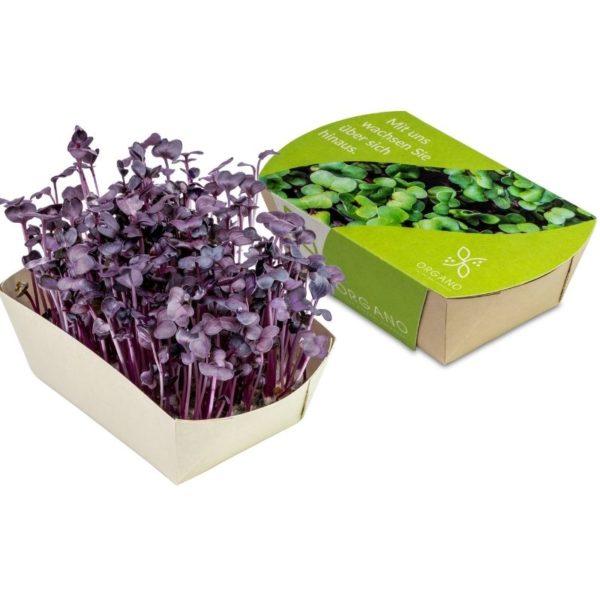 Mini_eco-jardin_rabano_sango_con_packaging