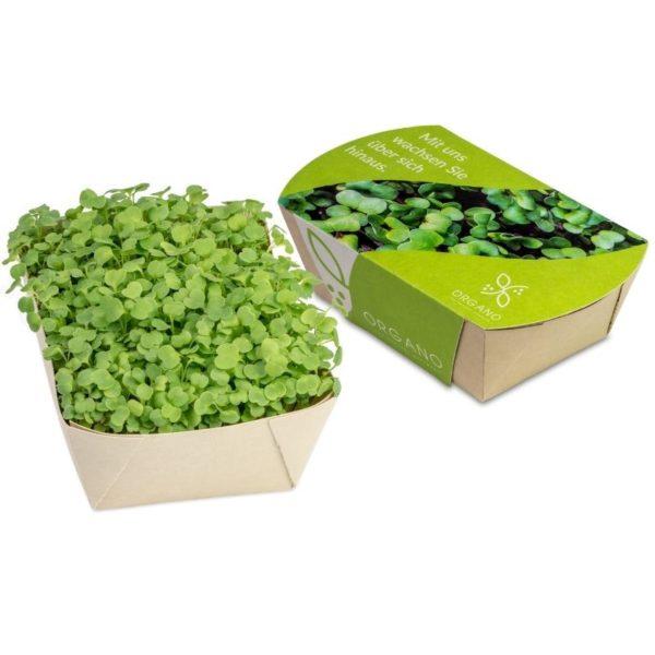 Mini_eco-jardín_rúcula_con_packaging